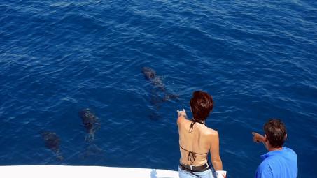 Verspiele Delphine