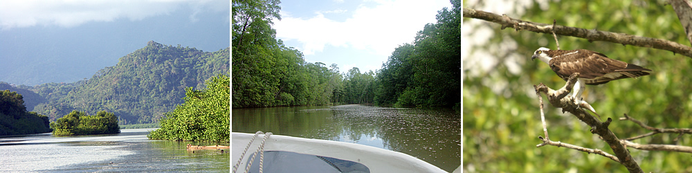The Mangroves Tour is ideal for nature and bird lovers.