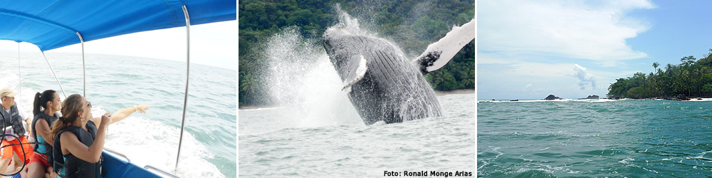 Whale-watching tours are the most popular activity at Hotel Cristal Ballena.