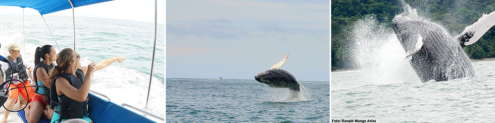 Photo of whale watching tour in the Marino Ballena national park