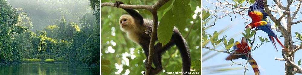 Der Corcovado Nationalpark bewahrt 65% von Costa Ricas Artenvielfalt