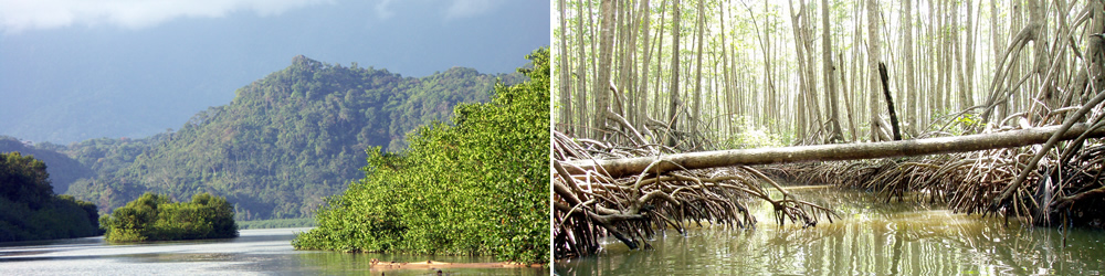 The Terraba-Sierpe Wetlands hold the largest mangrove reserve in Latin America