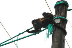 sustainable-tourism-monkey-crossing-on-rope-01