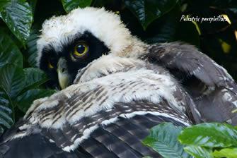 Turismo sostenible ave protegida